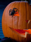Picture of carved halloween pumpkin with black spider on dark blue background